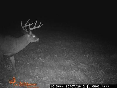 Trail cam photo 2 weeks prior